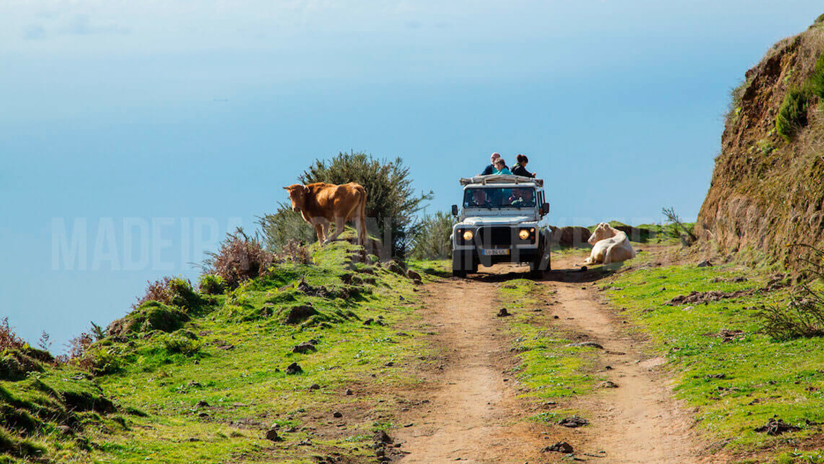 JEEP SAFARIS